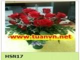 HSN17