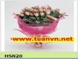 HSN20