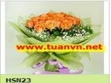 HSN23