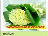 HSN24
